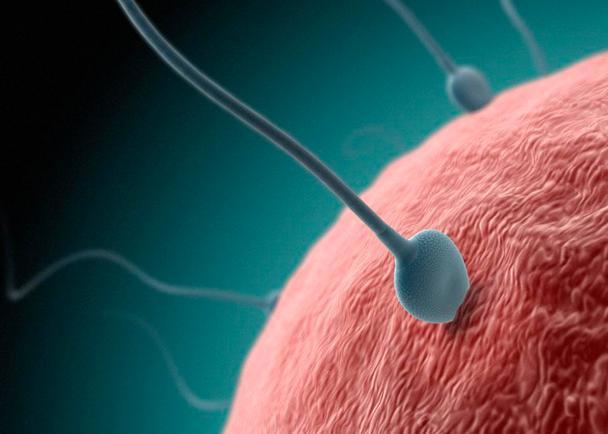 男人的精子可以吃吗?男人的精子是什么味道的-第3张图片-爱薇女性网