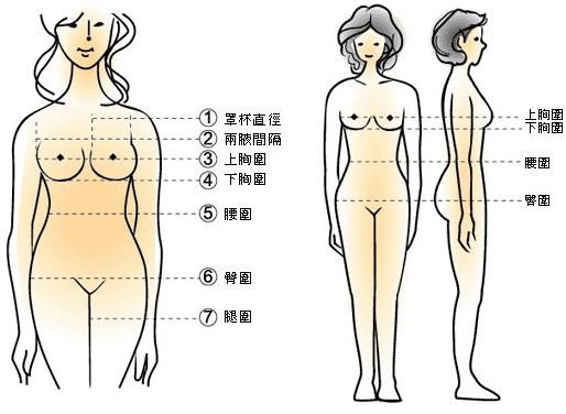 女性标准三围尺寸对照表-第3张图片-爱薇女性网