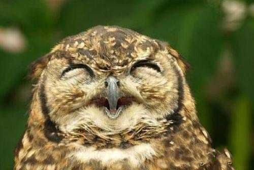 为什么不能对猫头鹰笑,猫头鹰笑预示着死亡