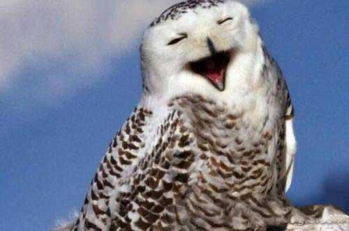 为什么不能对猫头鹰笑,猫头鹰笑预示着死亡-第2张图片-爱薇女性网