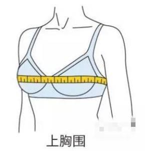 女性胸围尺寸讲解,真实ABCDEFG罩杯到底多大图片-第2张图片-爱薇女性网